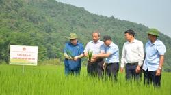 """Chủ tịch Hội Nông dân Việt Nam """"mách nước"""" giúp dân Lai Châu trồng lúa theo tiêu chuẩn quốc tế"""