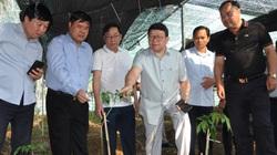 """Lai Châu: Nông dân bất ngờ """"thuần phục"""" thành công loài sâm rừng, có loại bán với giá 200 triệu/kg"""