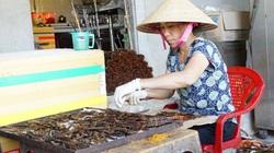 Tây Ninh: Nuôi rết độc, nghe tên nhiều người đã nổi da gà vậy mà nông dân ở đây bán 1kg giá 1,2 triệu