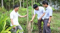 """Đắk Lắk: Trồng """"cây bạc tỷ"""", chạy theo phong trào, 15 năm sau nông dân mới ngã ngửa vì điều này"""