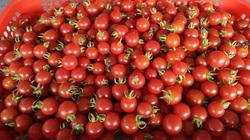Bình Định: Ứng dụng nông nghiệp công nghệ cao, nông dân trồng ra những thứ rau, quả ăn ngay tại ruộng