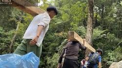 """""""Moi ruột"""" Vườn quốc gia Hoàng Liên (Bài 2): """"Lâm tặc"""" kể mánh phá rừng pơ mu ngay giữa lõi Vườn quốc gia"""