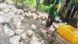 Giá gia cầm hôm nay 27/4: Giá gà công nghiệp giảm nhẹ, giống gà gì mà bán được 120.000-150.000 đồng/kg?