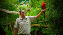 Mê mẩn với hàng trăm chú chim lông vũ khắp thế giới hội tụ tại Phú Quốc