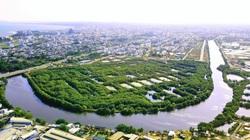 """Cận cảnh khu rừng ngập mặn ở TP.Phan Thiết mà Bí thư Tỉnh ủy Bình Thuận """"quyết"""" giữ"""