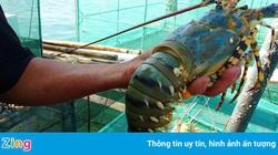 Covid-19 khiến nhiều đơn hàng thủy sản bị hủy