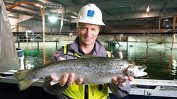 Biến điều điên rồ thành sự thật: Nuôi cá hồi trong bể cạn, đưa cá nước lạnh đến vùng nóng