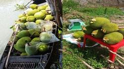 """Giá mít Thái hôm nay 28/4: Nhà vườn bán mít lẻ """"chạy đua"""" thời giảm giá, giá mít hôm nay tăng bao nhiêu?"""