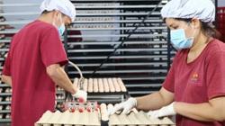 Những trại gà khổng lồ, hiện đại được xây dựng khắp nơi, thịt gà Việt Nam sẽ bán đi nhiều nước?