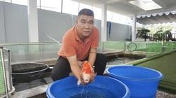 """Từ niềm đam mê với loài cá là quốc ngư của Nhật Bản, 8X Đà Nẵng trở thành """"ông trùm cá Koi"""""""