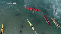 """Cảnh tượng rợn người khi đàn cá mập """"bao vây"""" thuyền kayak ngoài khơi"""