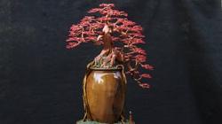 """Sơn La: Quanh năm ngồi nhà làm ra thứ cây bonsai """"bất tử"""" bán đi khắp nơi"""