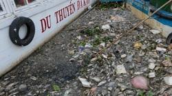 TP.HCM: Cá chết nổi dày đặc sau cơn mưa lớn ở kênh Nhiêu Lộc - Thị Nghè