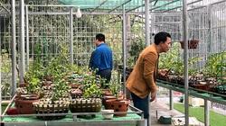 Hoa lan đột biến, những giao dịch hoa lan đột biến khủng, một vườn lan ở Tuyên Quang được định giá cả trăm tỷ đồng?