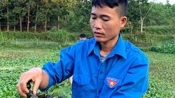 Tuyên Quang: Nuôi chơi chơi con ham ăn bèo, tối ngày lủi dưới ao mà đẻ rõ lắm, anh nông dân bất ngờ giàu lên