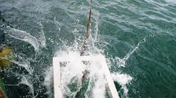 """Cà Mau: Ra biển """"xây nhà cho cá"""" nghe lạ tai khi hiểu ra ai cũng gật đầu ủng hộ"""