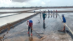 Nghề muối Bạc Liêu luôn đứng trước những thách thức rất lớn