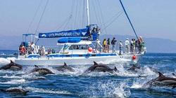 """Mỹ: Du khách chứng kiến cả nghìn con cá heo """"tháo chạy tán loạn"""""""