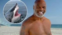 Mike Tyson: Tưởng được dự Shark Tank, ai dè đi ru... cá mập ngủ
