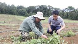 Kon Tum: Gần 300 mô hình trồng trọt, chăn nuôi hiệu quả ra đời nhờ dân vận khéo