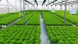 """Mới: 7 ưu đãi """"sốc"""" cho doanh nghiệp đầu tư vào các dự án nông nghiệp"""