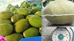 Giá mít Thái hôm nay 6/4: Cách trồng mít toàn ra trái mít Nhất hơn 10 kg/trái, giá mít đã tăng, nông dân mừng