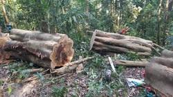 Lâm tặc đem cưa máy phá rừng Kông Chro
