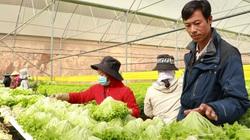 Lâm Đồng: Đẩy mạnh tập huấn xử lý thực phẩm an toàn cho rau sau thu hoạch