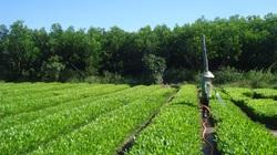 Mùa trồng rừng vụ xuân hè: Nông dân nên trồng cây gì, đề phòng sâu bệnh nào?