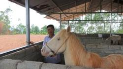 """""""Vén mây"""" đi tìm bạch mã xứ Lạng (bài 1): Ngược ngàn vào """"vương quốc ngựa bạch"""""""
