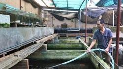 Nuôi cá chọi giữa thủ đô Hà Nội, ban đầu nuôi cho khuây khỏa, ai ngờ sau lại kiếm nửa tỷ đồng mỗi năm