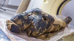 Phát hiện một xác ướp Ai Cập cổ đại đang mang thai 2.000 năm tuổi