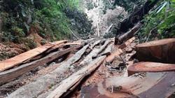 Lào Cai yêu cầu kiểm điểm, làm rõ trách nhiệm cá nhân liên quan vụ phá rừng pơ mu VQG Hoàng Liên
