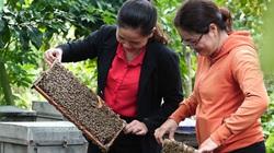 Thiệt hại nặng nề nếu mật ong Việt Nam bị Mỹ áp thuế chống bán phá giá