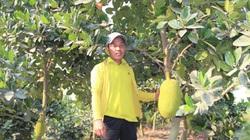 """Long An: Nông dân trồng cây ăn trái đang làm cách nào để """"né"""" hạn mặn, nắng nóng trong mùa khô?"""