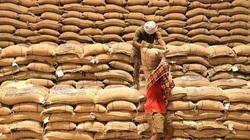 Giá gạo Ấn Độ chạm đáy vì dịch Covid-19