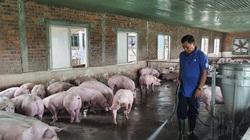 """Đà Nẵng: Nông dân tay ngang về nuôi lợn vẫn """"bỏ túi"""" nửa tỷ mỗi năm"""