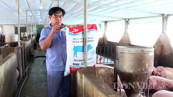 """Giá thức ăn chăn nuôi tăng vù vù, người chăn nuôi heo Đồng Nai """"chùn chân"""", không dám tái đàn"""