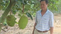Ninh Bình: U60 nuôi mấy loài con, trồng mấy giống cây trong vườn mà bỏ túi gần 500 triệu/năm