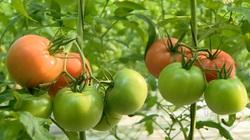 Nhật Bản nghiêm cấm mang cây giống, hạt giống cây trồng ra nước ngoài