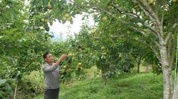 Giúp hộ nghèo có vốn nuôi trâu, trồng cây ăn quả