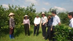 Hải Dương: Rót vốn cho nông dân trồng cam đường canh, trồng cà rốt xuất khẩu