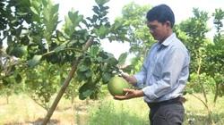 Bình Định: Vùng đất này ông trời tiết kiệm nước mưa, nông dân trồng cây gì mà ra trái quá trời?