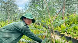 Làm giàu khác người: Một nông dân tỉnh Lâm Đồng hái lá cây bán thu tiền lời cao hơn gấp 4 lần trồng cà phê