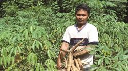 Trung Quốc cho thứ này vào thức ăn chăn nuôi, giá một loại nông sản của Việt Nam đột nhiên cao nhất trong 5 năm