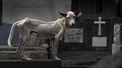 Cuộc sống của những người dân phải tìm thức ăn thừa, còn vật nuôi gầy trơ xương ở nghĩa trang