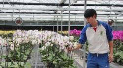 Quảng Ninh: Trồng trà hoa vàng, trồng hoa lan hồ điệp là những mô hình sản xuất cho nông dân thu nhập cao