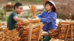 Chuyện bầu cử ở Quảng Ninh: Khi tiếng nói của người nông dân ngày càng được lắng nghe