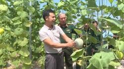 Ứng Hòa: Nhiều nông dân thử một lần chơi lớn trồng đủ loại rau, quả áp dụng công nghệ cao khiến thiên hạ trầm trồ