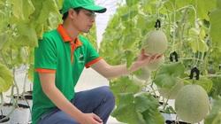 """Anh nông dân Hòa Bình trồng dưa lưới """"đẻ"""" trên 200 tấn quả/năm, dưa ngọt lịm, không có để bán"""